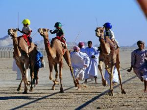 Children Racing Camels by Mark Daffey