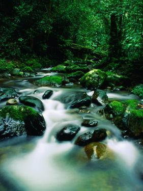 Liwagu River at Kinabalu National Park, Sabah, Malaysia by Mark Daffey