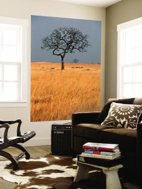 Lone Tree in Grassland by Mark Daffey