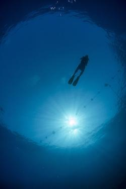 Silhouette of One Scuba Diver and Sunball Underwater, Fish Eye View, Egypt, North Africa, Africa by Mark Doherty