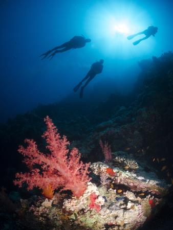 Silhouette of Three Scuba Divers Above Coral Reef