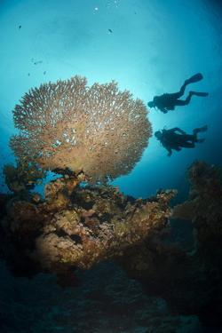 Silhouette of Two Scuba Divers Above Table Coral by Mark Doherty