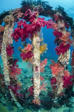 Soft Coral Growing on a Sunken Cargo Container, Ras Mohammed National Park, Red Sea, Egypt by Mark Doherty