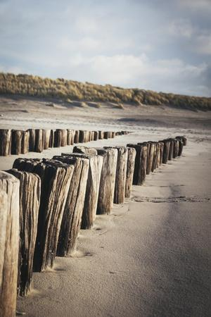Wooden Groynes on a Sandy Beach, Leading to Sand Dunes, Domburg, Zeeland, the Netherlands, Europe