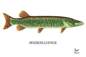 Muskellunge by Mark Frost