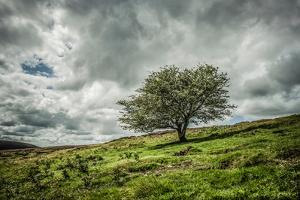 Blowing Over by Mark Gemmell