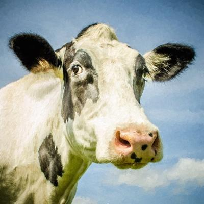Close Up of Cow's Face