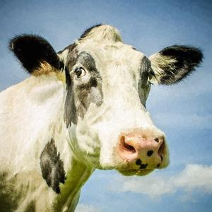 Close Up of Cow's Face by Mark Gemmell