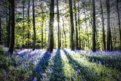 English Woodland in Spring