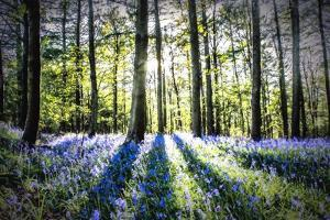 English Woodland in Spring by Mark Gemmell