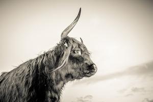 The Highlands 4 by Mark Gemmell