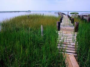 Shoreline and Dock, Chincoteague Island by Mark Gibson