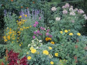 Various Species of Flowers in Garden by Mark Gibson