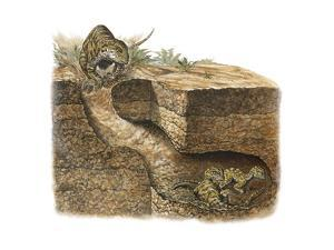 Dinosaurs Dig Burrows to Keep Predators Out by Mark Hallett
