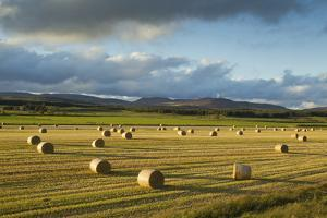 Barley Straw Bales in Field after Harvest, Inverness-Shire, Scotland, UK, October by Mark Hamblin