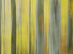 Common Beech, Impression of Woodlands, Scotland by Mark Hamblin