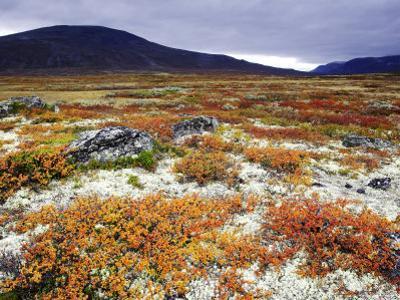 Dovrefjell National Park, Tundra in Autumn, Norway