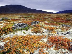 Dovrefjell National Park, Tundra in Autumn, Norway by Mark Hamblin