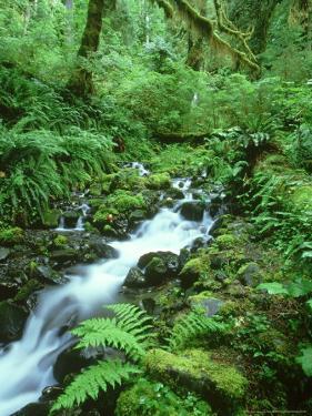 Hoh Rainforest, Olympic National Park Washington, USA by Mark Hamblin