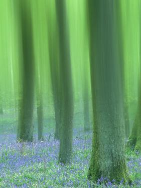 Impressions of a Bluebell Woodland, May, Spring Scotland, U K by Mark Hamblin