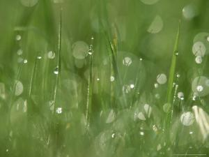Water Droplets on Grass, Close-up Detail Yorkshire, UK by Mark Hamblin