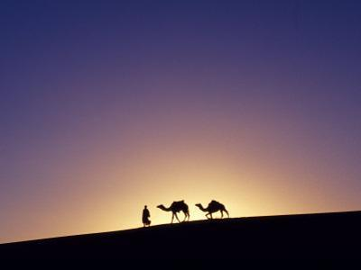 Berber Tribesman Leads His Two Camels Along the Top of Sand Dune in the Erg Chegaga, in the Sahara  by Mark Hannaford