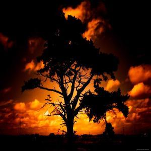 Reality Tree by Mark James Gaylard