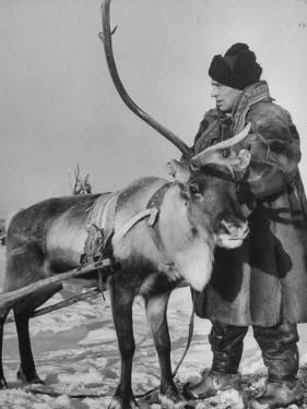 Lapp Tribesman Tending to His Reindeer by Mark Kauffman