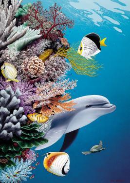 Dolphin's Reef, Hawaii by Mark Mackay