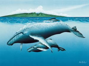 Mother and Child, Hawaiian Humpback Whales by Mark Mackay