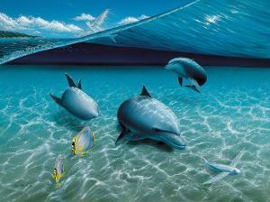 The Chase, Hawaiian Spinner Dolphins by Mark Mackay