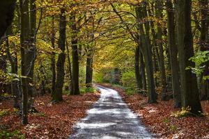 Burnham Beeches, Buckinghamshire, England, United Kingdom, Europe by Mark Mawson