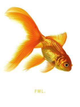 FML by Mark Mawson