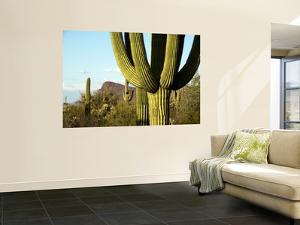 Cacti in West Unit of Saguaro National Park by Mark Newman