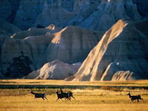 Mule Deer (Odocoileus Hemionus) with Backdrop of Rocky Hills, Badlands National Park, U.S.A. by Mark Newman