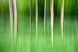 Abstract Trees by Mark Sunderland