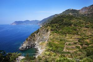 Terraced Vineyards at Corniglia by Mark Sunderland