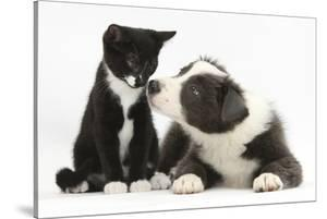 Blue and White Border Collie Puppy and Black and White Tuxedo Kitten, Tuxie, 11 Weeks by Mark Taylor