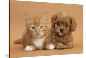 Cavapoo Puppy and Ginger Kitten by Mark Taylor
