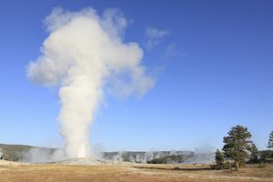 Old Faithful Geyser Blowing, Yellowstone National Park, Wyoming, USA by Mark Taylor