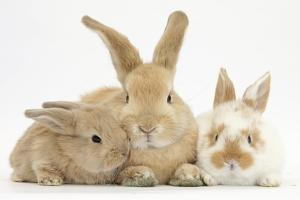 Sandy Rabbit and Two Babies by Mark Taylor