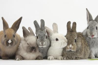 Six Baby Rabbits