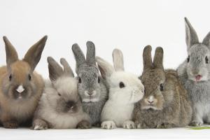 Six Baby Rabbits by Mark Taylor