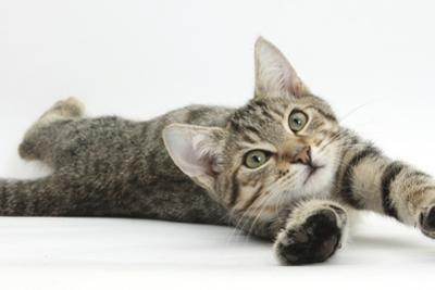 Tabby Male Kitten, Stanley, 4 Months Old, Lying and Stretching Out
