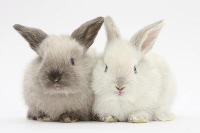 White and Grey Baby Rabbits by Mark Taylor
