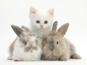 White Kitten and Baby Rabbits by Mark Taylor