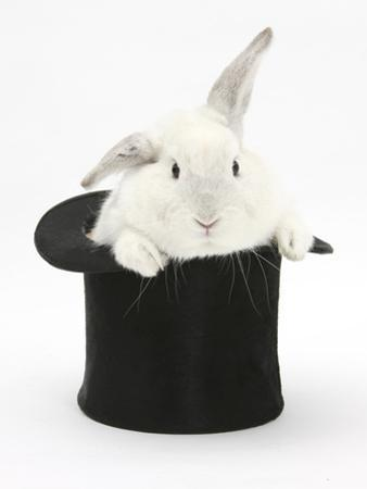 White Rabbit in a Black Top Hat by Mark Taylor