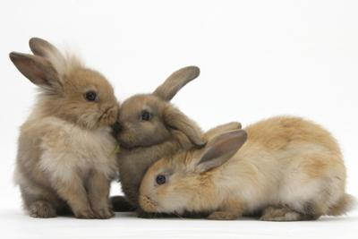 Young Sandy Rabbits by Mark Taylor