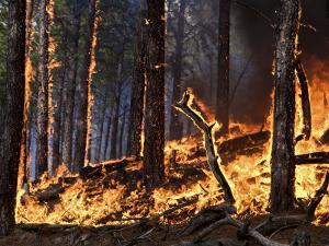 Forest fire caused by lightning in Custer State Park by Mark Thiessen