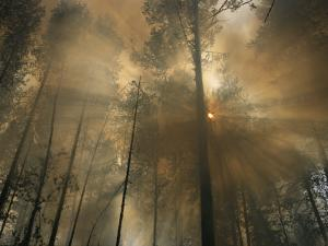 Sunlit Smoke Whispers the Firefighters Secret- Life Can Be Beautiful Even When the World Burns Down by Mark Thiessen
